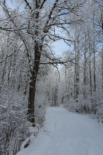 KHC-WinterMD
